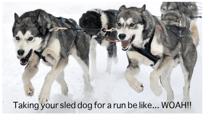 sled dogs meme